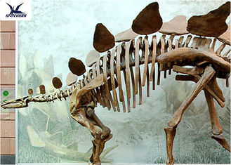 China Outdoor Indoor Decoration Dinosaur Skeleton Replica Fiberglass And High Quality Steel supplier