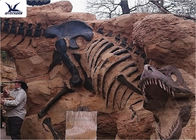 China Handmade Museum Dinosaur Skeleton Replica For Outdoor Decoration Warranty 1 Year company