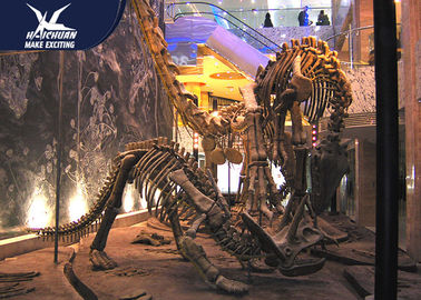 China Durable Fiberglass Life Size Dinosaur Skeleton / Dinosaur Fossil For Kids Educational factory